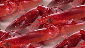 Красные кипеть ракы лежа на таблице стоковое фото rf