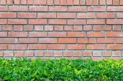 Красные кирпичная стена и зеленое растение Стоковые Изображения RF