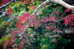 Красные кленовые листы в зиме стоковые фотографии rf