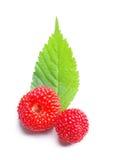 красные клубники одичалые Стоковая Фотография
