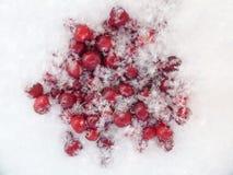 Красные клюквы на холодном снеге в зиме Стоковые Изображения
