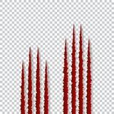 Красные когти царапают - вектор на прозрачной предпосылке Talons режут животного кота, собаки, тигра, льва, медведя иллюстрация штока