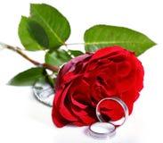 красные кольца подняли 2 wedding Стоковые Изображения RF
