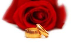 красные кольца подняли 2 wedding Стоковые Фотографии RF
