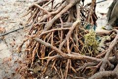 Красные корни мангровы стоковое изображение