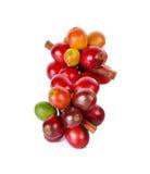 Красные кофейные зерна на ветви дерева кофе на белой предпосылке Стоковая Фотография