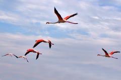красные крыла Стоковая Фотография RF