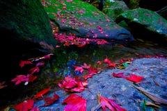 Красные кленовые листы приближают к водопаду стоковая фотография rf