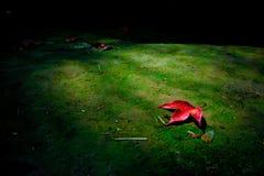Красные кленовые листы приближают к водопаду стоковая фотография