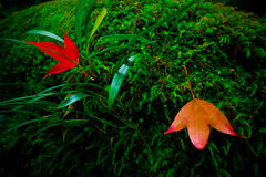 Красные кленовые листы приближают к водопаду стоковое фото