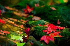 Красные кленовые листы приближают к водопаду стоковые изображения rf