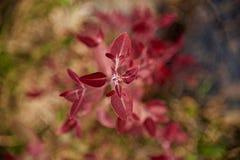 Красные листья фото красных заводов уникального стоковые изображения rf