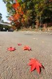 Красные листья autmn на земле Стоковое Изображение RF