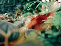 Красные лист в цветке зеленого цвета завода сада Стоковое Изображение RF