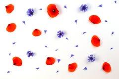 Красные маки и голубые cornflowers на белой предпосылке Плоское положение, взгляд сверху Стоковое Фото