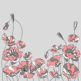 Красные маки на серой предпосылке Стоковые Изображения
