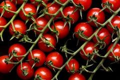 красные малые томаты Стоковое Изображение RF