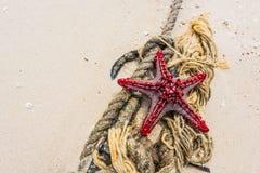 Красные морские звёзды на узле с анкером стоковая фотография rf