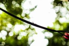 Красные муравьи идя на связанное проволокой Стоковые Изображения