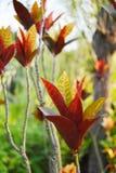 Красные осенние листья иллюстрация штока