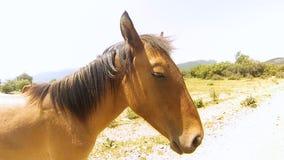 Красные лошади в горах Крыма в лете сток-видео