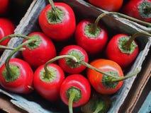 Красные перцы в коробке Стоковая Фотография RF