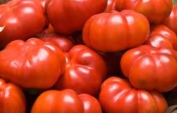 Красные перцы Стоковая Фотография