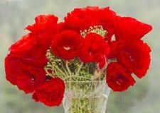 Красные полевые цветки rhoeas мака, мак кукурузного поля с бутонами, Стоковое Изображение