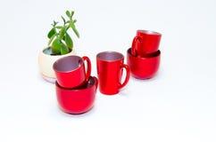 Красные пустые чашки чаю (кофе) и ovata или нефрит crassula завод Стоковые Изображения