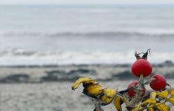 Красные плоды шиповника на сером пляже зимы Балтийского моря, предпосылка, Стоковая Фотография
