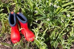 Красные резиновые ботинки в траве с snowdrops Стоковое Изображение RF