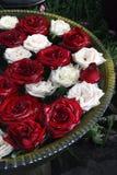 красные розы белые Стоковая Фотография