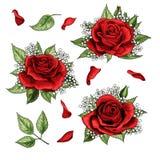 Красные розы вручают набор вычерченных элементов иллюстрации покрашенный иллюстрация штока