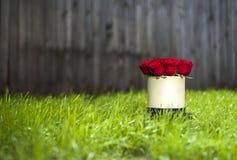 Красные розы в белой подарочной коробке на предпосылке зеленой травы Стоковые Изображения