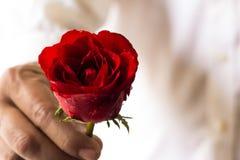 Красные розы в руке стоковые фото