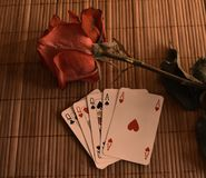 Красные розы в тени Выражение романско Утро рассвет Озеро Байкал Стоковая Фотография RF