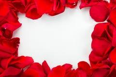 Красные розы на белой деревянной предпосылке Стоковая Фотография RF