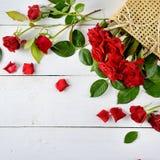 Красные розы на белой деревянной предпосылке Стоковые Фото