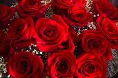 Красные розы, свежие чувства Стоковые Фото