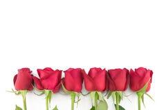 Красные розы с зеленой ветвью на белизне Стоковая Фотография
