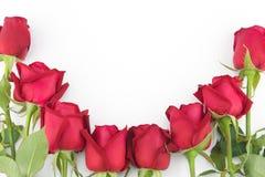 Красные розы с зеленой ветвью на белизне Стоковое фото RF