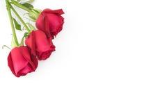 Красные розы с зеленой ветвью на белизне Стоковые Фото