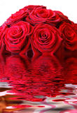 красные розы стоковые изображения