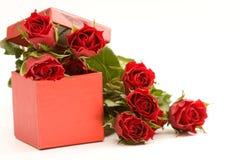 красные розы Стоковое Изображение RF
