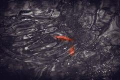 Красные рыбы в малом озере парка стоковые изображения