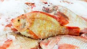 красные рыбы тилапии на полке с льдом для надувательства в супермаркете Стоковая Фотография