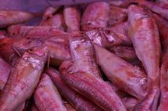 Красные рыбы Стоковое Фото