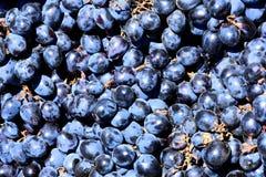 Красные свежие виноградины Стоковое Фото