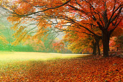 Красные сезоны лист Стоковое Изображение