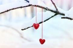 Красные сердца на снежной ветви дерева в зиме Концепция влюбленности сердца торжества дня валентинок праздников счастливая Стоковая Фотография RF